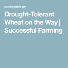 Drought-Tolerant Wheat on the Way | Successful Farming
