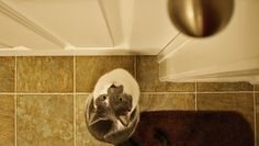 cat waiting at door