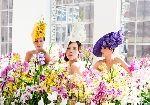 orchid hat Philip Treacy