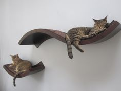 Fancy Design Ideas Of Unique Cat Trees With Wall Mount Curve Shape Wooden Cat Sleeper Beds With Building Cat Furniture  Plus Make Cat Scratching Post, Marvellous Design Ideas Of Unique Cat Trees: Interior