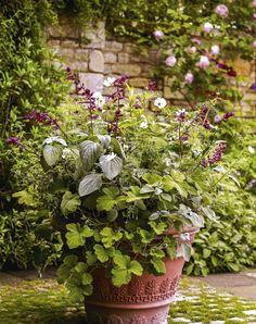 Cosmos bipinnatus 'Purity', Pelargonium tomentosum, Plectranthus argentatus, Plumbago auriculata f. alba & Salvia 'Love and Wishes' ©Andrew Montgomery, Gardens Illustrated, July 2017