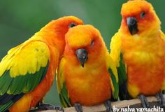Birds - Colores / Colors