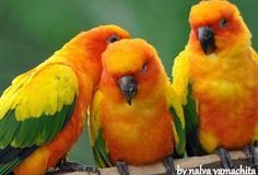 Birds - Colores / Colors