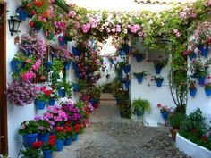 Flowers everywhere Patios