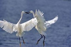 Bird - GATAG | Free Images and Photos 4.0