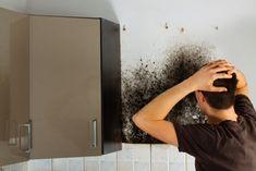 Black Mold Removal: 7 Effective Hacks to Clean black Mold Clean Black Mold, Remove Black Mold, Borax Cleaning, Cleaning Hacks, Cleaning Products, Cream Carpet Bedroom, Cleaning Oven Racks, Drywall Repair, Carpet Trends