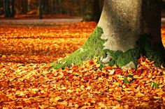 Free Image on Pixabay - Fall Foliage, Moss, Tree, Autumn Share Pictures, Free Pictures, Photography Tips, Landscape Photography, France Culture, Tourism Day, Living Off The Land, Plantation, Mother Earth