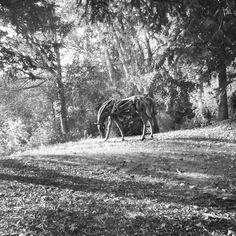 WOODEN HORSE.