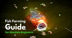 A Home Based Fish Farming Guide for Absolute Beginners