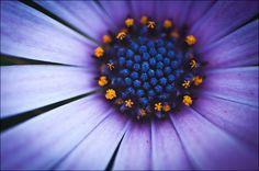 Tasmania flower