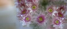 SWEET FLOWERS by Charo  Arroyo on 500px