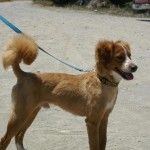 Kyproskoirat Shelters, Rescue Dogs, Homes, Animals, Homeless Shelters, Houses, Animaux, Animales, Shelter