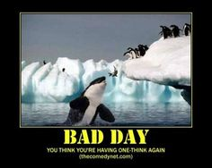 You think you're having a bad day ... think again!