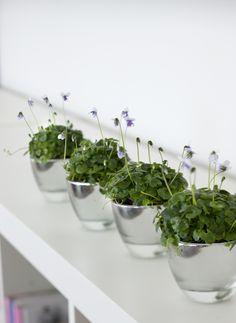 Viola hederacea ~ Australian violet in silver pots Potted Plants, Indoor Plants, Indoor Garden, Houseplants, Pots, Planters, Flowers, Silver, Deco