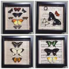Lots of beautiful butterfly frames by @curious_menagerie in stock only 40 each. #taxidermy #ethicaltaxidermy #taxidermyart #taxidermylondon #taxidermyforsale #taxidermist #butterfly #butterflies #vintage #music #sheetmusic #entemology #camden #camdenmarket #stablesmarket #camdenmouse #Mousquerade by camdenmouse