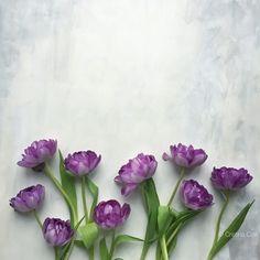 Flower flat lay © Cristina Colli - Instagram c_colli