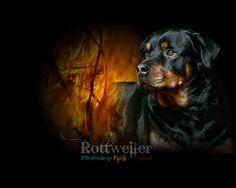 Mobile Phone X Rottweiler Wallpapers HD Desktop Backgrounds