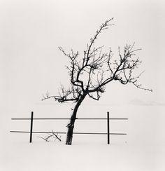 Michael Kenna. Tree and Fence, Nakafurano, Hokkaido, Japan. 2012