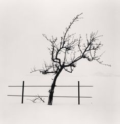 Michael Kenna. Tree and Fence, Nakafurano, Hokkaido, Japan. 2012