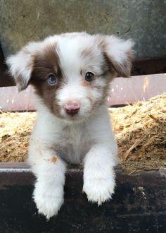 ¿no te encanta? es un cachorrito PRECIOSO!!!!!