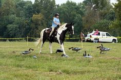 Extreme Trail Horse Obstacles | 2012/10/01