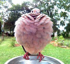 Woman Captures Colorful Visitors to Her Backyard Bird Photo Booth Bird People, Mourning Dove, Bird House Kits, Bird Aviary, Kinds Of Birds, Backyard Birds, Photo Postcards, Wild Birds, Blue Bird