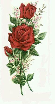 Sueño de rose