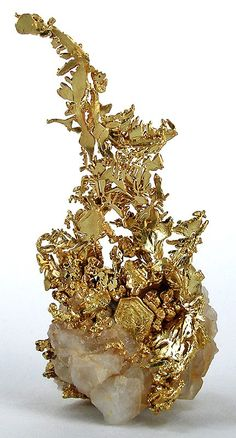 Very fine old crystalline-gold specimen, probably from Tuolomne County. Sold in the 1950s for $65; more recently for $12,500.