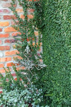 My current most favorite climbing vine is Creeping Fig Vine . We have it planted on a wall in our courtyard, and it has almost completely co...