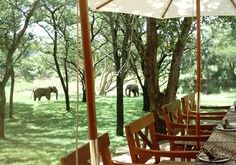 Thula Thula Safari Lodge, South Africa / Beyond the beauty and tranquility of this private game reserve and wildlife sanctuary, is a 360-degree approach to sustainability and conservation. The Lawrence Anthony Earth Organization as founded by Lawrence, provides spectacular Eco Safaris for small groups to Thula Thula, helping to fund important conservation work, as well as other initiatives such as recycling and educational programs in local schools.