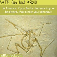 WTF Fun Facts is updated daily with interesting & funny random facts. We post about health, celebs/people, places, animals, history information and much more. New facts all day - every day! True Facts, Funny Facts, Random Facts, Funny Memes, It's Funny, Random Stuff, The More You Know, Good To Know, Boy Facts