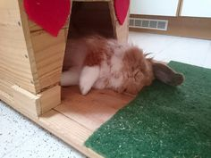 My bunny Pimousse deeply asleep in his little house #Pimousse