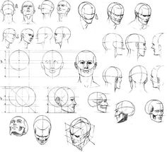 Head proportion from statue forums Anatomy Sketches, Anatomy Drawing, Drawing Sketches, Art Drawings, Human Anatomy, Drawing Heads, Body Drawing, Life Drawing, Anatomy Reference