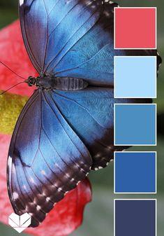 Color palettes 493144227950719867 - Color Palette: Insect Inspiration — Paper Heart Design Source by felixiaw Color Schemes Colour Palettes, Nature Color Palette, Blue Colour Palette, Color Combos, Blue Color Pallet, Palette Design, Blue Morpho, Polychromos, Colour Board