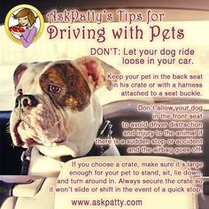 AP-Tips-for-Driving-with-Pets-1
