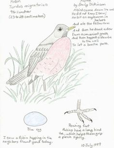 Bird page with drawings and poem