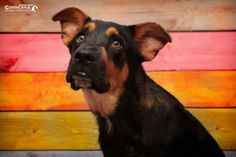 Blake - URGENT - City of Corsicana Animal Shelter, Corsicana, Texas - ADOPT OR…