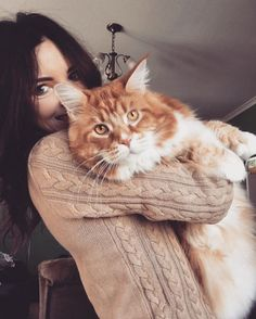 Omar, this Maine Coon is the latest new sensation on Instagram. Omar is not the average looking cat; he holds the distinction of being the longest cat weighing twice as big as a dog a