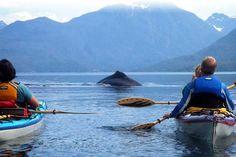 Kayak British Columbia - Kayaking tours off Vancouver Island British Columbia, Canada. Kayaking the pristine waters of the Inside Passage. Sea kayak tours, Mothership kayaking, camping and lodge based kayaking tours. Kayak with orcas (killer whales) and humpback whales.