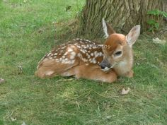 Darling Deer Baby Fawn by DBestnOutdoorPhotos on Etsy, $12.50