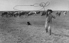 A gulyás pányvát dob, Nádudvar (Hajdú vm. Budapest Hungary, Old Pictures, Historical Photos, The Past, Horses, History, Country, Animals, Europe