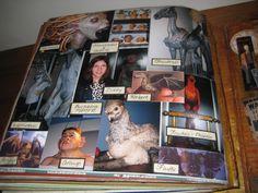 Mystical creatures Harry Potter scrapbook