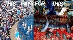Every year off the coast of Japan, more than 20,000 Dolphins are driven into a small cove in Taiji, Japan, and killed. This brutal act is supported and subsidized by Corporations such as Seaworld, and the World Association of Zoos and Aquariums; who both keep Dolphins and Whales in captivity.    Dolphins...