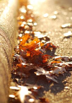 """~ Autumn ~  """"Stop lamenting summer and stop trying to hurry winter. Just enjoy…"""