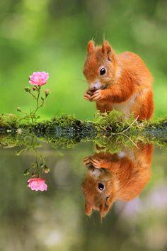 De kracht van de eekhoorn kan op vele manieren tot uiting komen, aangezien de aard van dit in bont geklede schepsel vele facetten heeft. Vooral het grillig gedrag.