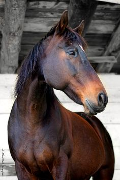 via gypsymare.blogspot  ~you have to check out this site! Wonderful Equestrian art & photos!!!