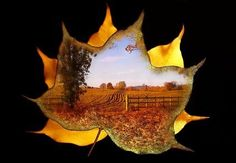 autumn fun... This is a gorgeous art picture idea!!!Maybe difficult for my class but someone else could do this:)