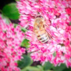 Bee flowerpower