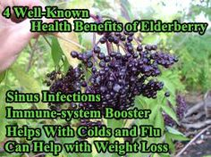 4 Well-Known Health Benefits of Elderberry