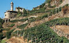 Rainoldi vineyards in Lombardy wine holiday